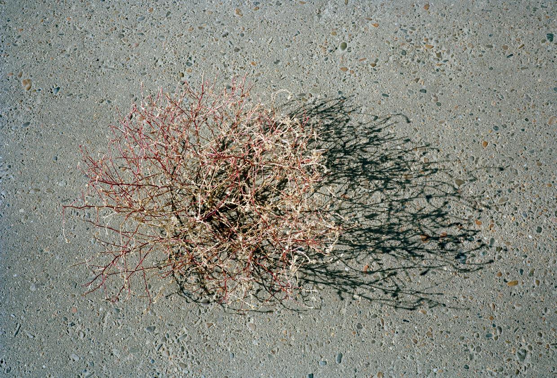 tumbleweed copy